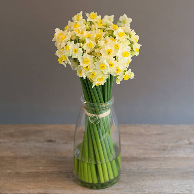 16 best fourth grade images on pinterest greek mythology fourth the flower narcissus is a greek allusion because of the guy narcissus that love himself so much aphrodite turned him into a flower fandeluxe Choice Image