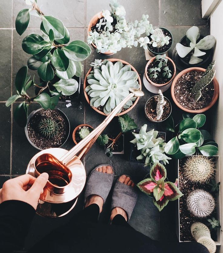 "Houseplant Club on Instagram: ""The watering ritual  : @_momoe_ welcome to the #houseplantclub """