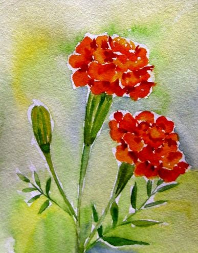 quot Marigold from My Garden quot Small Watercolor painting by