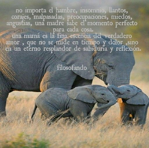 Amor materno/filosofando
