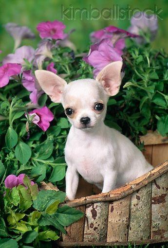 Pretty as a petunia;)