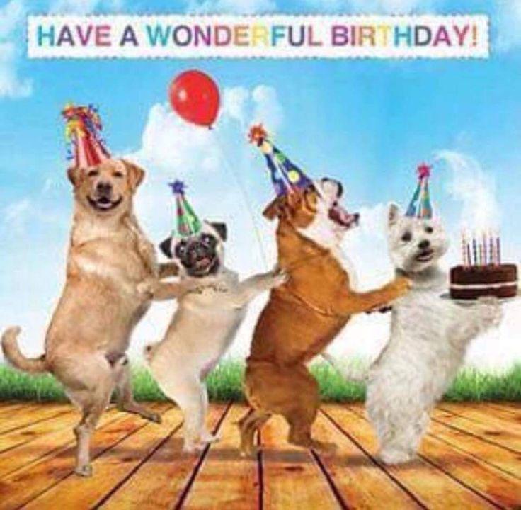 2550 best verjaardagskaartjes images – Happy Birthday Dog Card