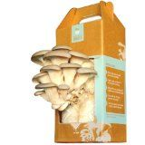 One Oyster Mushroom Growing Garden Kit from Back to the Roots.Everything you need to grow and harvest mushrooms in as few as 10 days. Three simple steps: open box, mist with water, harvest the crop Kit contains recycled coffee grounds for soil, pearl oyster mushroom spawn (seed), and spray mister. Harvest up to 1.5 pounds of oyster mushrooms per box. Please do not remove the plastic completely it is necessary to maintain moisture for the mushrooms to grow