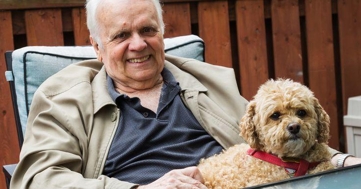 73歳の老人の入院患者がいた。彼は、食べることも喋る事も出来ず、ほぼ寝たきりの状態。生きる希望も無く、「その時」が来るのを待つばかりだった。そんな彼がある日、看護師に1つお願いをした。「入院以来、離ればなれになっている愛犬ババに会いたい。」看護師たちは老人を助けることが出来るのなら、と探し始めた。すると、動物保護センターでババを発見。だが、ババも老人と同じように病に冒され、偶然にも男性と同時...