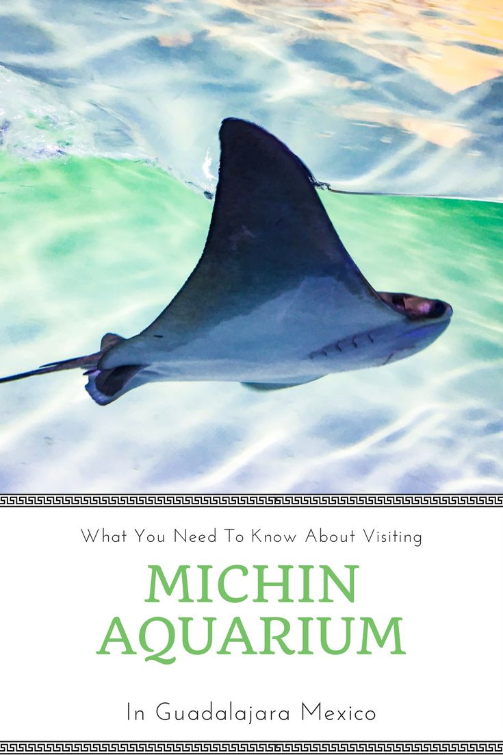 When my husband's coworker offered to take us to Michin Aquarium in Gaudalajara, Mexico, we jumped at the opportunity!