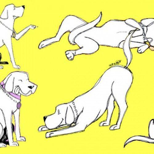o que os cachorro querem dizer