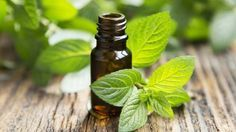 peppermint oil | Learn How To Get Rid Of Spiders Naturally and Safer Way, check it out at http://survivallife.com/10-natural-ways-to-repel-spiders/