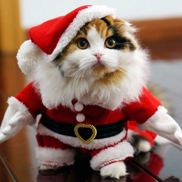 15 best Cat Costumes images on Pinterest | Cat costumes, Dog cat ...