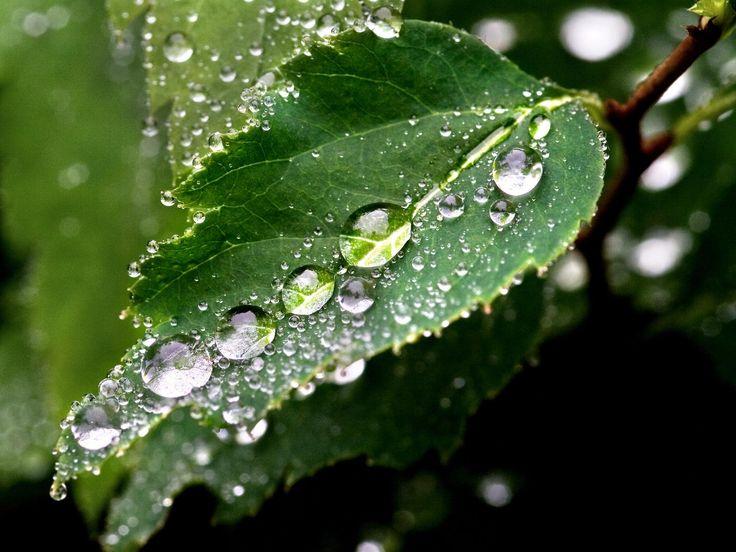 lluvia | Hojas Con Gotas De Lluvia En Fondos Y Pantallas Fotograf A 1920x1440 ...: