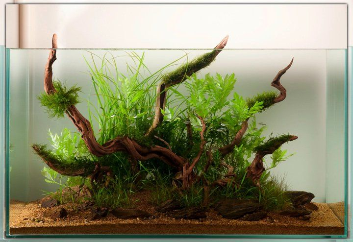 Image by The Green Machine (With images) | Aquascape ...