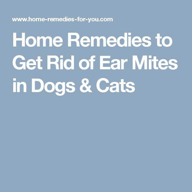 How To Get Rid Of Mites On Dogs Home Remedy