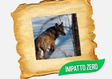 WWF Italia - Adozioni - Adotta un lupo