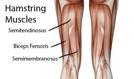 Укрепление Коленного Сустава Упражнения - Нога 2 Подколенного Сухожилия Завиток