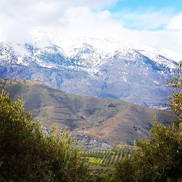 olivenhain in den bergen kretas - natur pur - olivenöl vom feinsten!