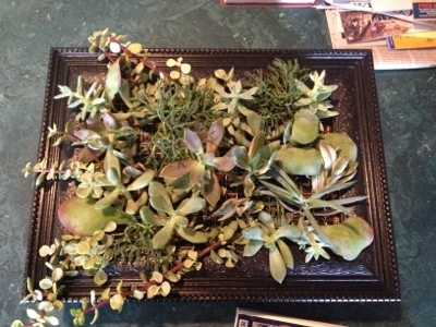 17 Best Images About Living Wall Art On Pinterest Gardens Succulent Frame And Succulent Wall