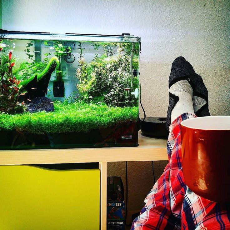 Best 25 10 gallon fish tank ideas on pinterest biorb for 10 gallon fish tank stocking ideas