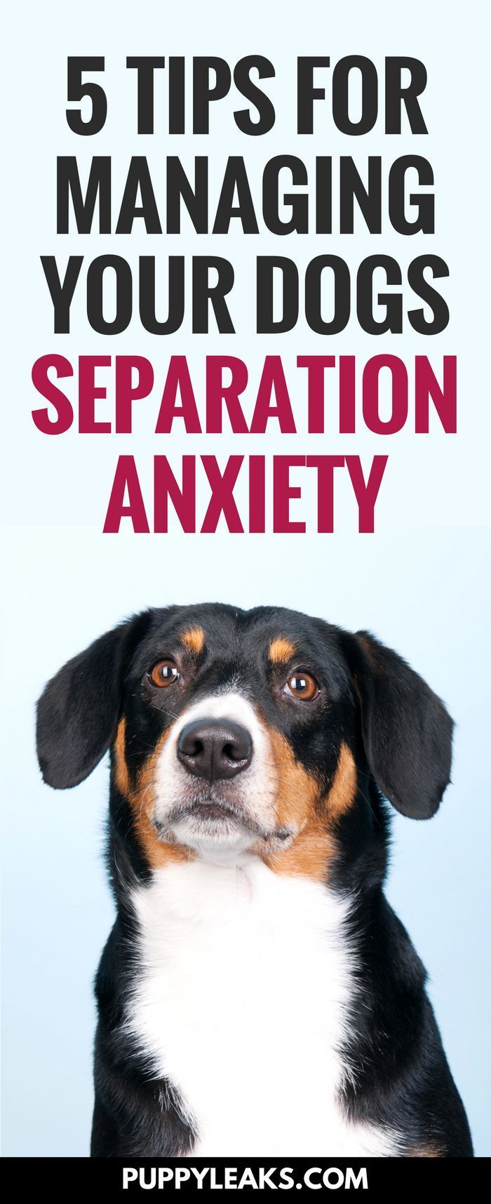 Does your dog get nervous and anxious when you leave? If so they're exhibiting signs of canine separation anxiety. Here's 5 tips to help manage your dog's separation anxiety. #dogs #dogtraining #dogtips #dogadvice