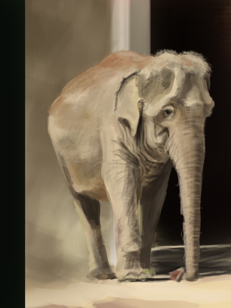 Digital Elephant study