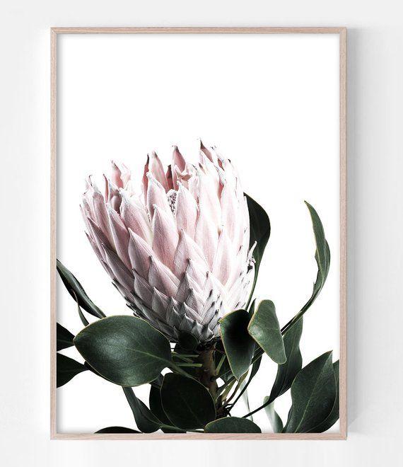 Protea Art Blush Pink Wall Art Flower Photography Protea Print Protea Flower Print Flower Art Flower Wall Art Blush Pink Decor Protea Art Flower Wall Art Pink Wall Art