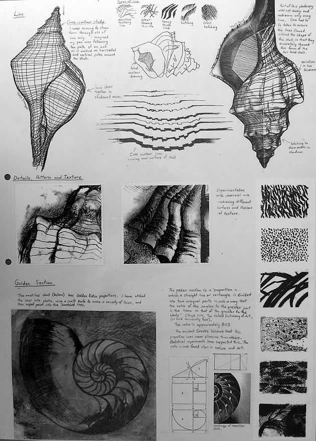 Another comprehensive sketchbook page based on the natural forms of shells. In addition to trialling a range of media and drawing techniques, students begin looking more closely at texture. Charcoal drawings of textured surfaces, as well as an etching of a nautilus shell (with notes about the Golden Section) are included.