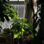 Come effettuare il trasloco delle piante