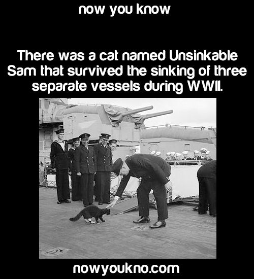 bluewater239:  thepokecrafter:  nowyoukno:  Source for more facts follow NowYouKno     That cat must have really hated water.  Wait. Is it not even a little suspicious that the same cat was on 3 separate ships that sank??