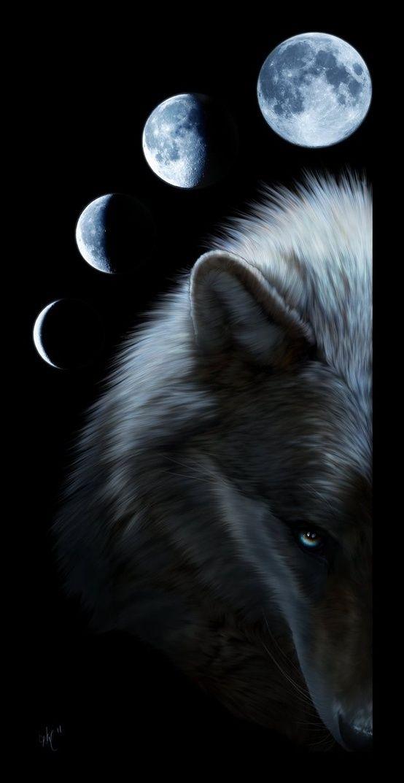 animal guide wolf moon