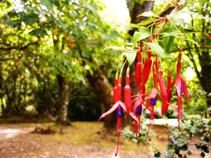 Jardin Botanico - Valdivia