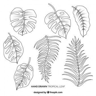 Kostenlos Tropische Pflanzenbilder genießen