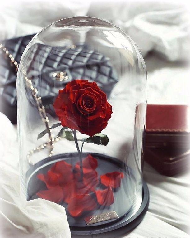 Самые красивые картинки роза бойлер свадьба это