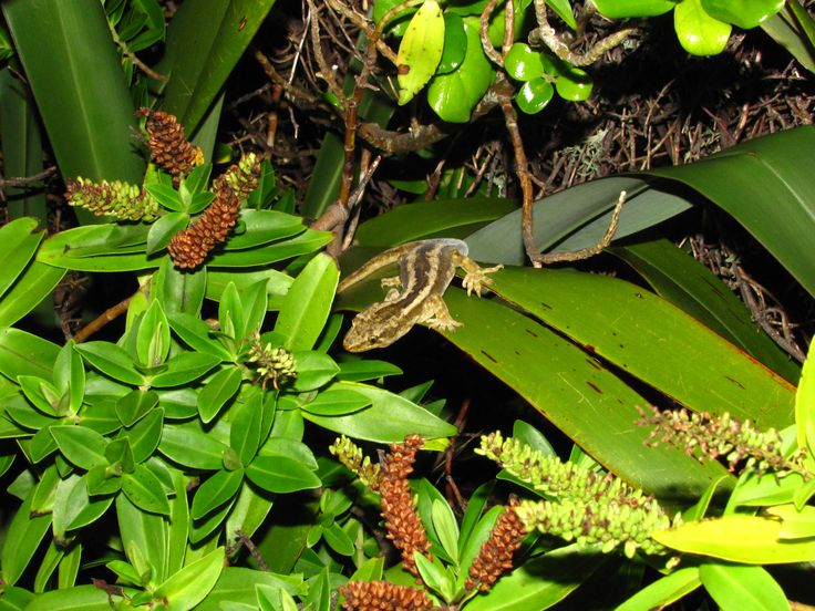 A great resource about what to plant in your Wellington garden to encourage geckos and skinks.