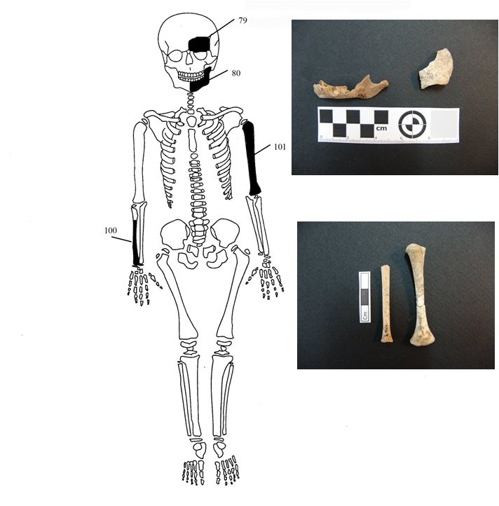 The Kingdom Of News: Archaeology: Who are the skeletons found in Amphip...
