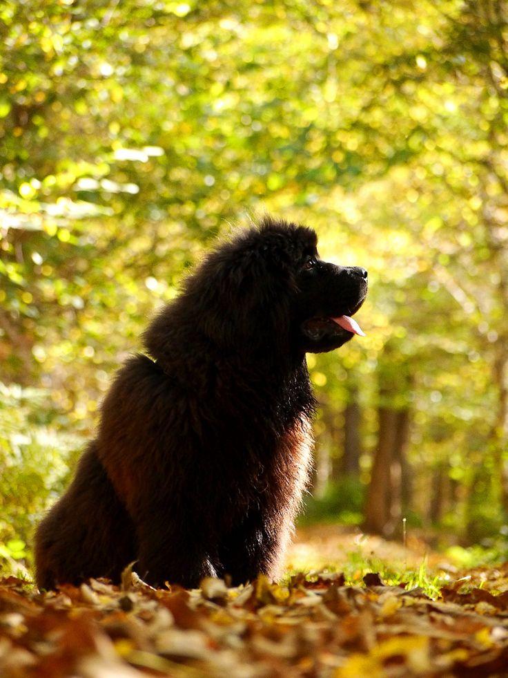 Große Hunde Welpen