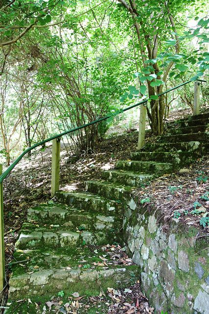 Mossy Stairway - Melbourne, Australia
