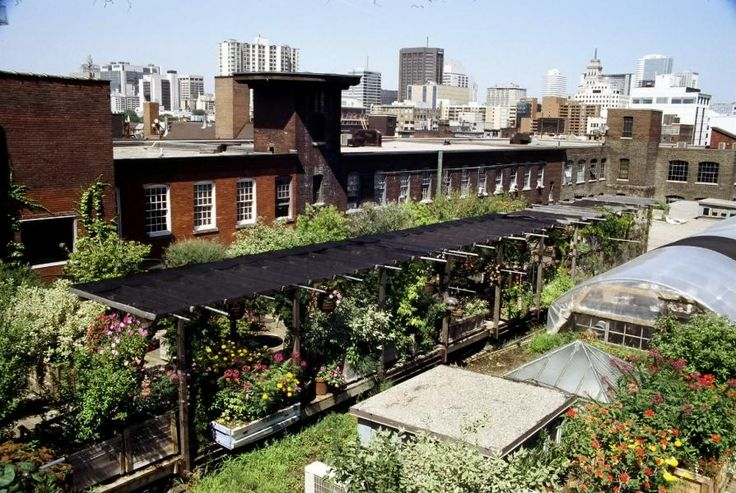 Rooftop Gardening In Chicago · Http://hometrendy.org/roof Garden  Design Ideas/chicago Roof Garden Design Ideas | Gardening With Altitude |  Pinterest ...