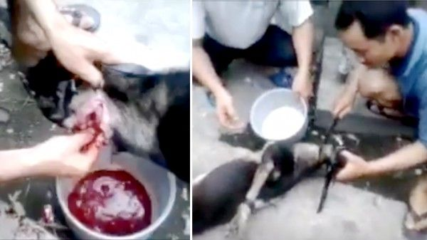 The country where dogs continue to be slashed into pieces despite OFFICIAL ban! Act Now! | YouSignAnimals.org