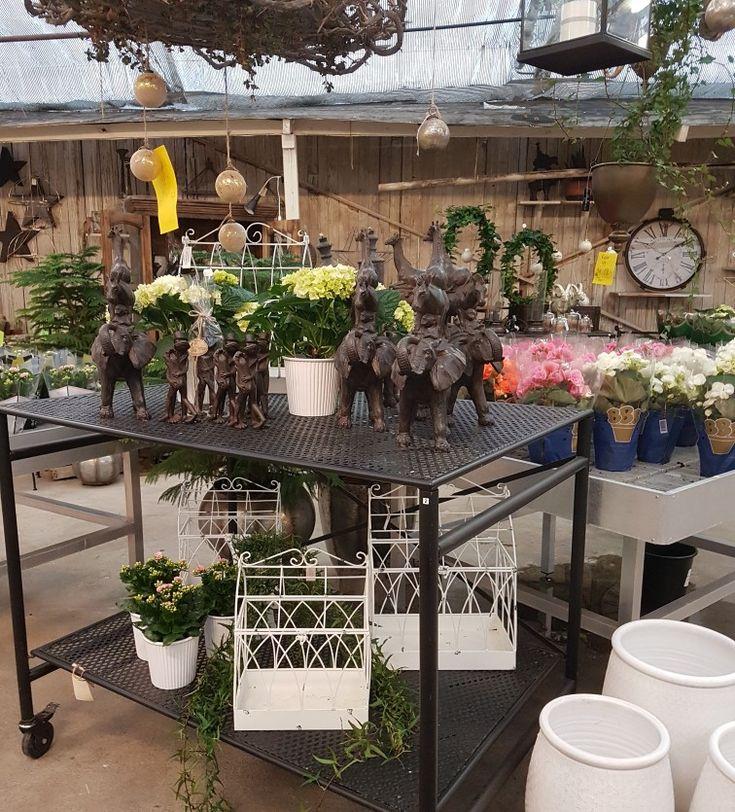 Kom och hälsa på oss idag, öppet 10-15. Massor av olika gröna växter till 20% rabatt! 🌿🌿🌿🌿🌿🌿#lillahults @lillahults