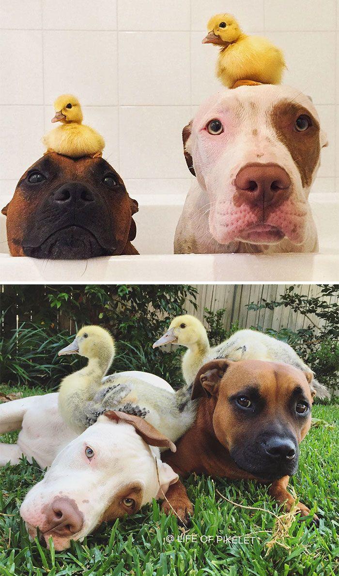 Fotos antes y después de animales creciendo juntos