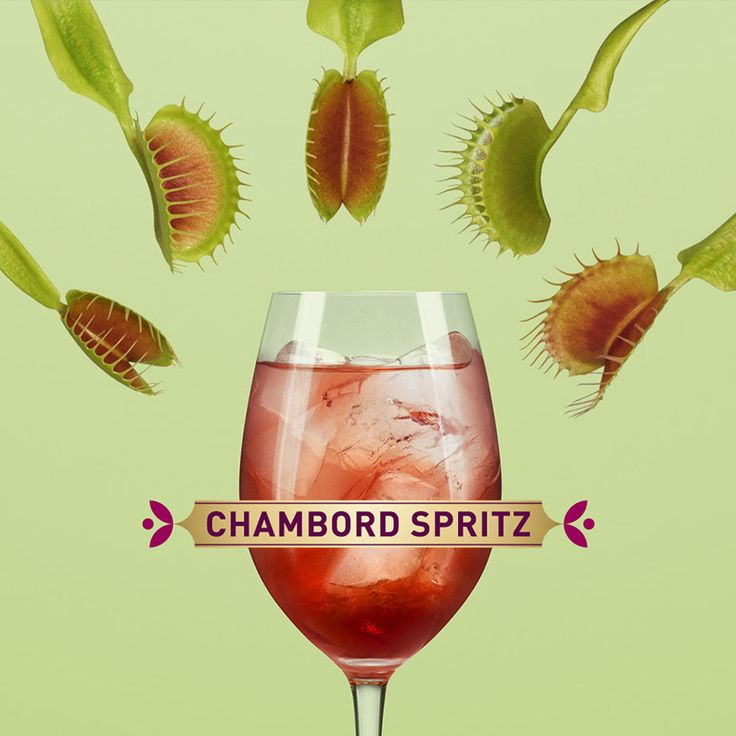 how to make a chambord spritz recipe sodas dr oz and