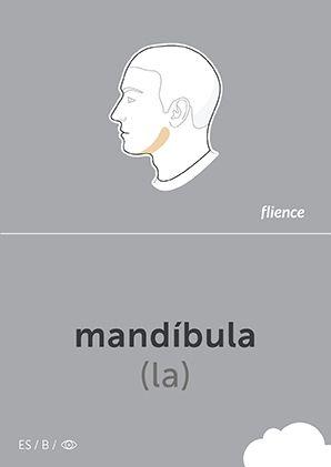 Mandíbula #CardFly #flience #human #spanish #education #flashcard #language