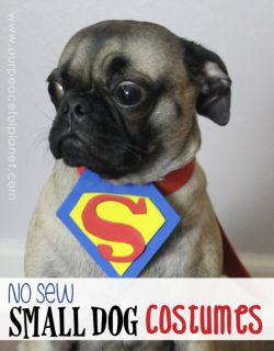 Top 25+ best Small dog halloween costumes ideas on Pinterest ...