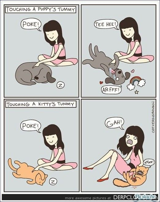 This is why I love dogs!! Hate cats!