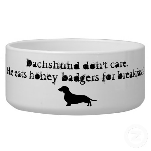 Dachshunds were originally bred for badger hunting. Doxie lovers will enjoy this humorous spin on the honey badger theme. Dachshund don't care, he eats honey badgers for breakfast.
