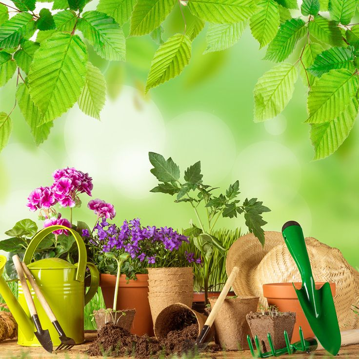 Plantarte | Diseño de Exteriores, Jardinería Profesional, Mantenimiento, Construcción