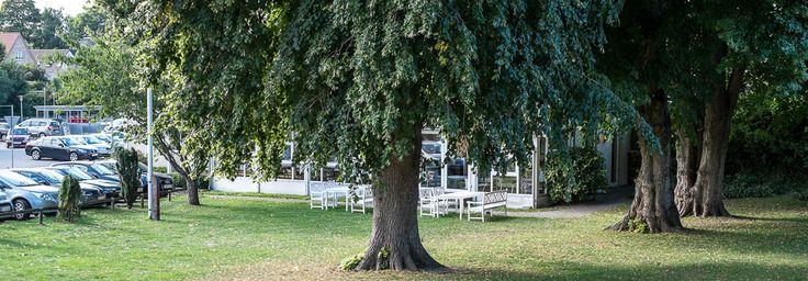 De gamle træer på Malling Kro