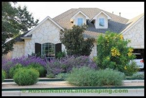Drought_Resistant_landscaping_drought_resistant_grass_Austin_tx