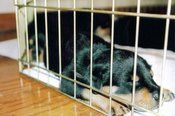 puppy crate training 101 schedule, and break down