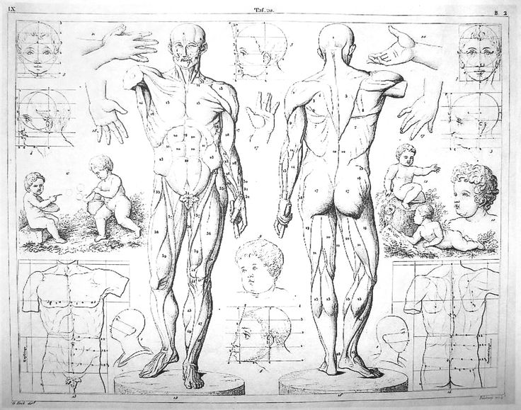 Best 25 human anatomy for artists ideas on pinterest anatomy figure drawing human anatomy for artists and drawing proportions of the human body fandeluxe Gallery