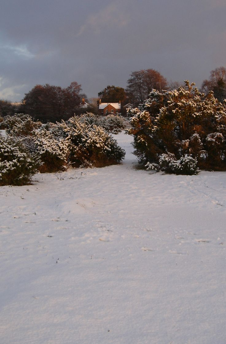 Butts Lawn, Brockenhurst, New Forest, in the snow. Taken by Jeremy Anson in 2010.
