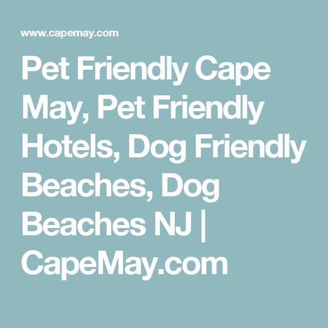 Pet Friendly Cape May, Pet Friendly Hotels, Dog Friendly Beaches, Dog Beaches NJ | CapeMay.com
